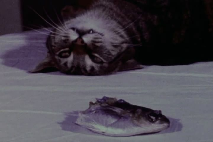 http://img137.imageshack.us/img137/6959/catfood1.jpg